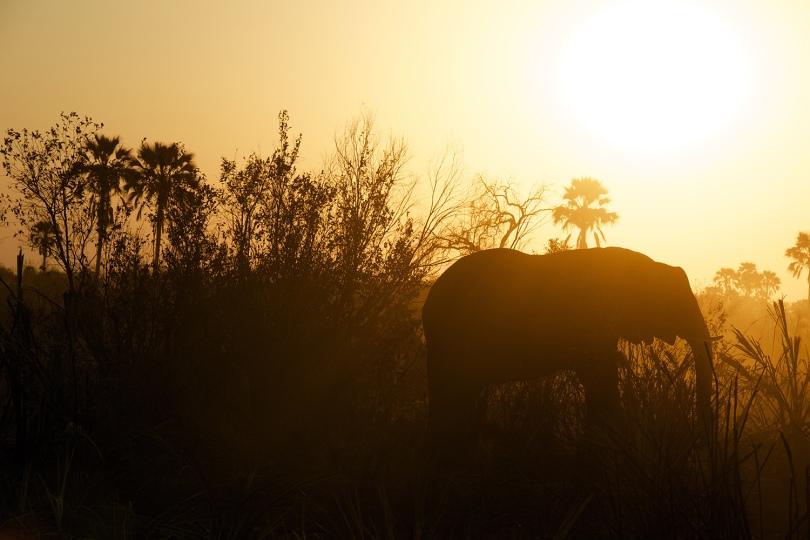 elephant andy brunner