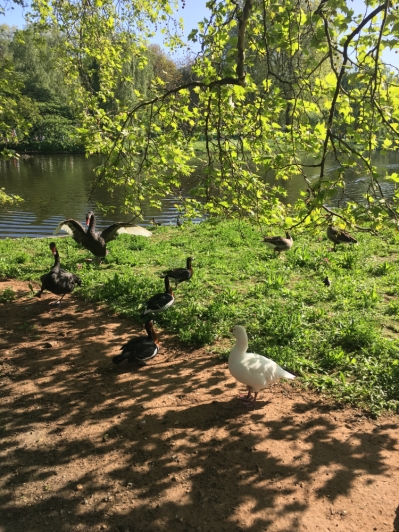 london-green-park-3 (1)